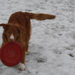River after finding the Frisbee buried in the snow!